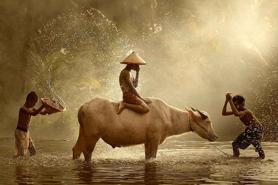 natural light photography with animals